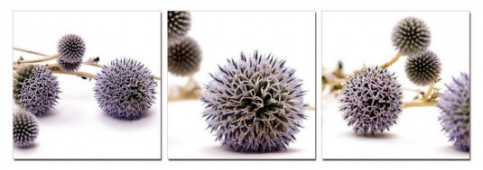 VIG Thistle 3-panel Photo On Canvas Available Online in Dallas Fort Worth Texas