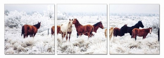 VIG Mustangs 3-Panel Photo On Canvas Available Online in Dallas Fort Worth Texas