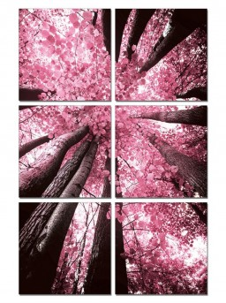 VIG Blossom Trees 6-Panel Photo On Canvas Available Online in Dallas Fort Worth Texas