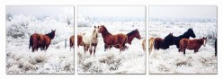 VIG Mustangs 3-Panel Photo On C... Available Online in Dallas Fort Worth Texas